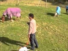 CLICK HERE; http://doggydandogtraining.com for 100+  dog training videos.