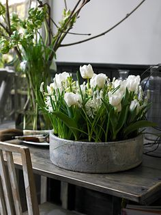 Bulbs, bulbs, bulbs. Forced, white tulips in a minimalist container. Beautiful.