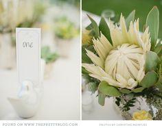 white protea