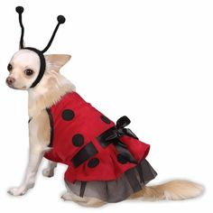 Casual Canine Lady Bug Costume - Large