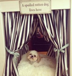 A spoiled rotten dog lives here..
