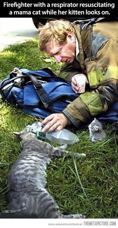 firefighter resusciating a mama cat while her kitten looks on