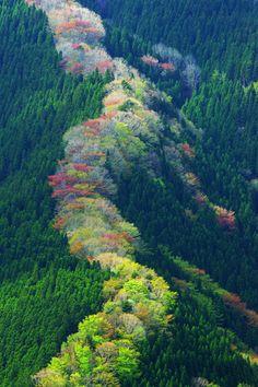 tree, nara japan, beauti place, japan photo, beauti japan, valleymountain gyojagaeridak, nameko valleymountain, nature mountains green, photographi