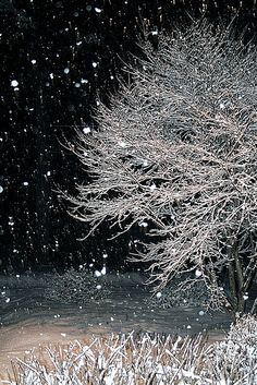 falling snow,beautiful.....
