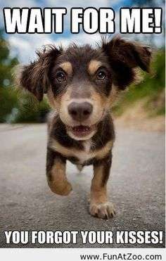 Funny cute dog picture - Funny Picture