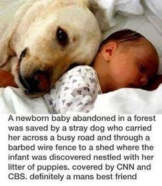 Newborn Baby Saved by Dog - The message is based on a reportedly true incident that occurred in Kenya back in 2005. According to news reports, the dog indeed brought the baby back to her own litter of puppies, although exact details of the rescue are hazy.  While the story itself appears to be true, the image in the message does not show the rescuing dog or the rescued baby.