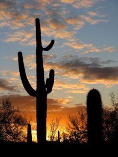 Sonoran Desert sunset - Maricopa County, Arizona