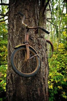 A boy left his bike chained up to this tree and went to war in 1914...