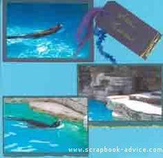 Aquarium Sealions Scrapbook Layout