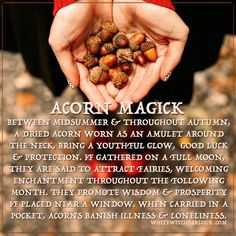 """ACORNS, METAPHYSICAL CORRESPONDENCE, witch, alchemy, spells, magick, book of shadows, wicca, herbs, nature, meaning, symbolism. <a href=""""http://www.whitewitchparlour.com"""" rel=""""nofollow"""" target=""""_blank"""">www.whitewitchpar...</a>"""