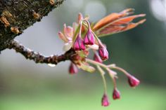 My Heartstring Lovely spring.