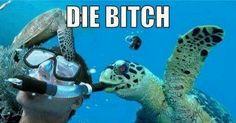 Scumbag turtle