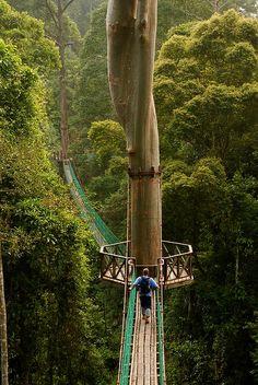 Rainforest Canopy Walkway - Borneo