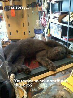 Our store cat, Smoke. We miss you little buddy. #cat #meme #cathumor #catmeme #greaycat #lazycat