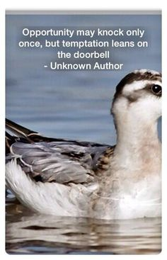 Twitter Quote - Opportunity may knock only once, but temptation leans on the doorbell - Unknown Author