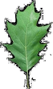 Leaf Identification Website : )
