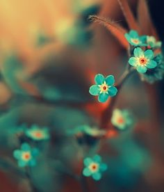 soft focus teal tinies. forget-me-nots
