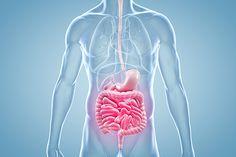 Fiber-Rich Diet Boosts Survival From Colon Cancer advise
