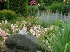 flower carpet, garden, carpet rose