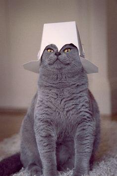 Cat in a hat.