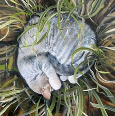 """Hiding"" Jean Bradbury Seattle, WA United States  See more cat art at: http://pussiesonparade.com  #cat #cats #catart #catpainting #kitten #kitty #art #illustration #drawing #caturday"