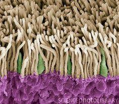 Retina rods and cones