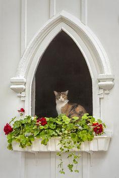 Pretty window!  Cute cat :)