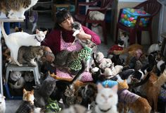 """Peruvian nurse cares for 175 sick cats. """"What a special woman."""""""