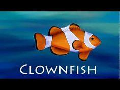 Ocean Animals (for children)