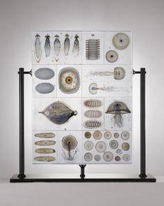 The Biologically-Inspired Glass Work of Danish Artist Steffan Dam.  Very Cool!
