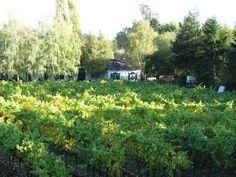 A shot of John Suacci's vineyard. Beautiful!