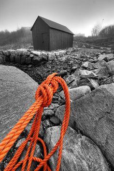 Orange by Lisa-Mari, via Flickr