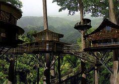 finca bellavista, tree houses, treehous, costa rica, trees