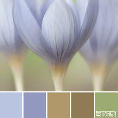 Pale Petals #patternpod #patternpodcolor #color #colorpalettes