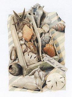 bastin natur, sea shell, sea art, bastin art, nature sketches, marjolein bastin, artist work, beach, favorit artist