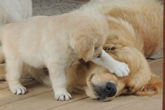 Wake Up! #cute #adorable #puppy #dog #pets