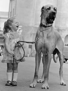 Great Dane great danes, little girls, anim, friends, pet, puppi, walk, big dogs, kid