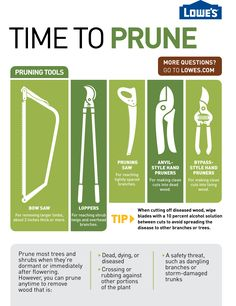 Tips for pruning this fall including what each tool is good for, how to care for and how to reduce the spreading of disease.