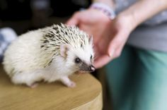 Here are some hedgeh