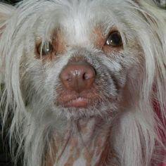 Hairless dog adopted