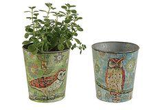Tin Planters w/ Owl, Asst. of 2 on OneKingsLane.com