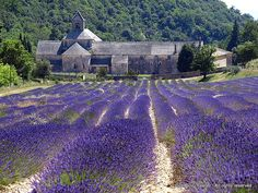 A country house in a field of lavender France.