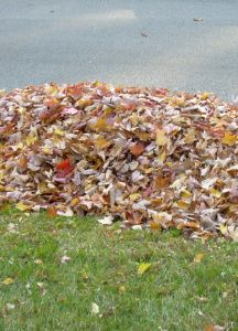 4 Simple Tips To Making Great Compost With Leaves