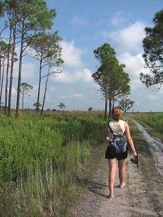 Alabama State Tree - Longleaf Pine