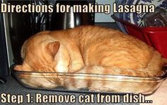 Making lasagna…