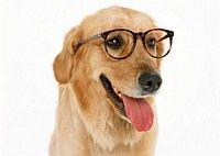 Pet Ear Care