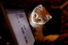 I want Facebook too....