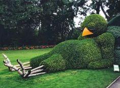 Big bird in the garden