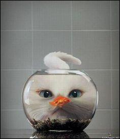 goldfish.  CAT.