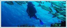 Activities Isla Mujeres